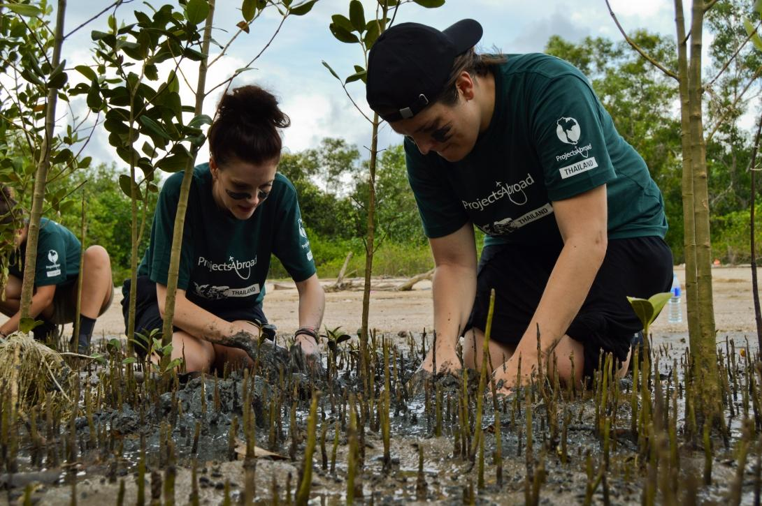 Two volunteers on an Alternative Schoolies trip to Thailand work hard planting mangroves as part of ongoing conservation efforts.